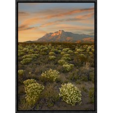 East Urban Home 'Blooming Pepperweed and El Capitan, Guadalupe Mountains Np, Texas ' Framed Photographic Print on Canvas EAUB5480