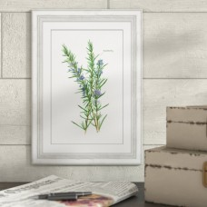 Gracie Oaks 'Rosemary Herb' Framed Watercolor Painting Print GRKS2648