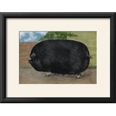 August Grove 'Champion Sow' Framed Print AGRV1506