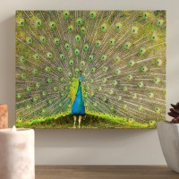 Bloomsbury Market 'Peacock' Photographic Print on Canvas BLMK3212