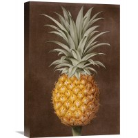 Global Gallery 'Pineapple' by George Brookshaw Painting Print on Wrapped Canvas VHY9284