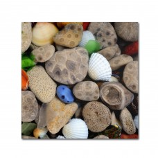 "Trademark Art ""PetoskeyStones V"" by Michelle Calkins Photographic Print on Wrapped Canvas HYT5926"